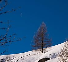 Tree and the moon by David SINIGAGLIA
