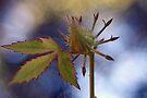 Bud and Leaf by RebeccaBlackman