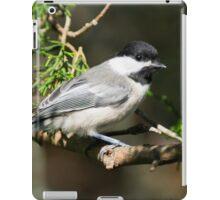 Chickadee Up Close iPad Case/Skin