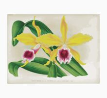 Iconagraphy of Orchids Iconographie des Orchidées Jean Jules Linden V17 1906 0110 Baby Tee