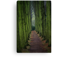 Pining For Green Canvas Print