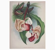 Iconagraphy of Orchids Iconographie des Orchidées Jean Jules Linden V2 V3 1893 0019 One Piece - Long Sleeve