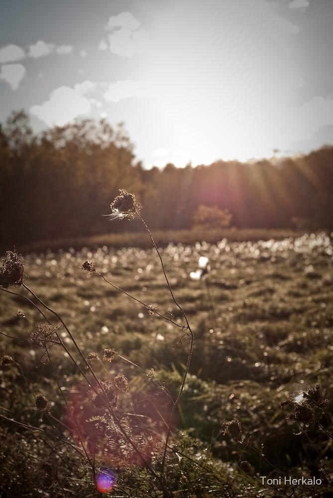 Field of Glimmer by Toni Herkalo