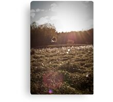 Field of Glimmer Canvas Print