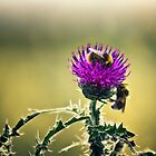 Bees on a Thistle by Vicki Field