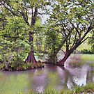 Starke Park  by Susan Russell