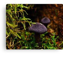 Purple Mushroom Macro Canvas Print