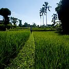 Exploring off the beaten track - Ubud, Bali by Kate Alexander