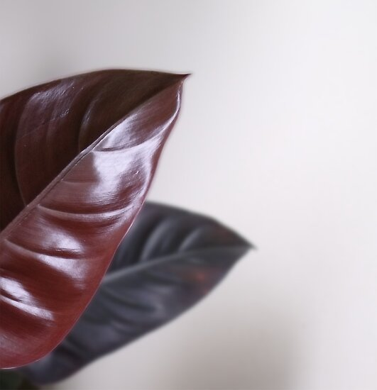 Philodendron Leaf by David Mellor