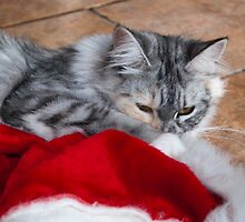 Kitten and Santa's hat by elainejhillson