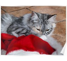 Kitten and Santa's hat Poster