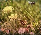 ~ Bee Mine ~ by Lynda Heins