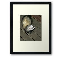 Ferret Fun Framed Print