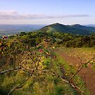 Malvern Hills : Autumn Berries by Angie Latham
