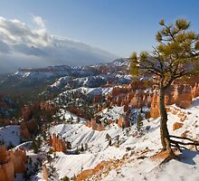 Bryce Canyon snowscape by Rachael Talibart