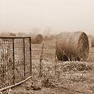 Hay through the Fog by Julie Sleeman