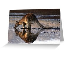 Eastern Grey Kangaroo Drinking Greeting Card