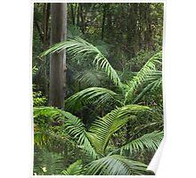 Subtropical rainforest Poster