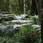Sunkissed Ferns in the Bush by aussiebushstick