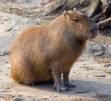 Adorbz Capybara by cute-wildlife