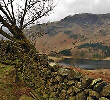 A place to rest on Lingmoor fell by Blagnys