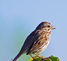 Dear Sparrow... by Jessica Dzupina