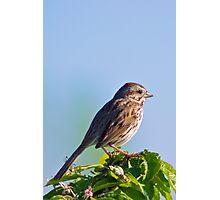 Dear Sparrow... Photographic Print