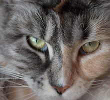 Baleful stare by elainejhillson