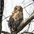 Baby owl by Gouzelka