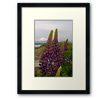 lupin and mt baker Framed Print
