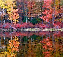 Harriman State Park - New York by Catherine Mardix