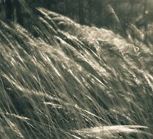 Harbringer Of Change by Mitch Labuda