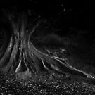 Moreton Bay Fig by blueeyesjus