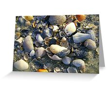 Shell Collection Greeting Card