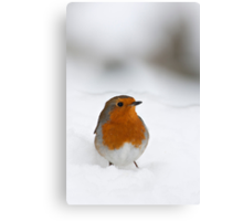 Robin braving the morning snow, The Rower, County Kilkenny, Ireland Canvas Print