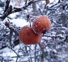 Icy Crab Apple by charlylou