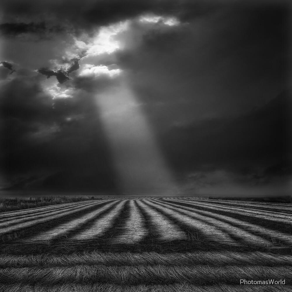 Flax Field by PhotomasWorld