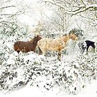 Horses In Snow by Andrew Lever