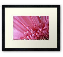 Pink Flower Petals Framed Print