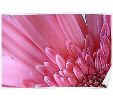 Pink Flower Petals Poster