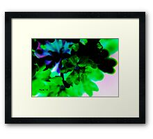 Who Sits In The Shade Framed Print