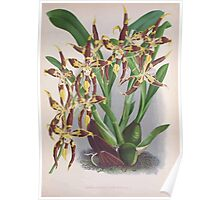 Iconagraphy of Orchids Iconographie des Orchidées Jean Jules Linden V3 1887 0021 Poster