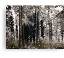 Winter102 Canvas Print