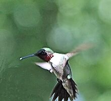 PAINTED HUMMER by BOLLA67