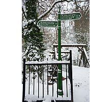 Which Way: Dulwich Woods, London, UK. Photographic Print