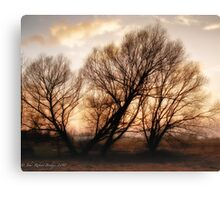 Trees at Sunset Canvas Print