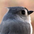Tufted Titmouse Profile Portrait ... Slick Back Hair by Jean Gregory  Evans