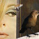 Birds eye view by Susan Ringler