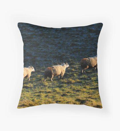 Three Sheep Walking Throw Pillow
