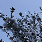 Cherry Tree and Moon by karenfou